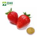 Strawberry fruit Extract Powder bulk