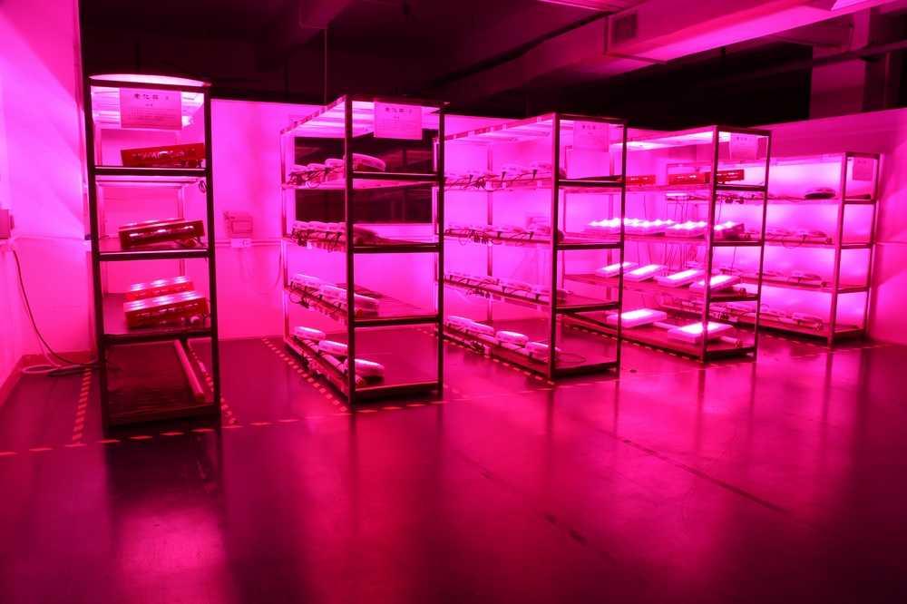 LED Vegetable Light