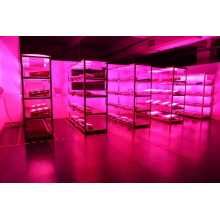 Veg/Bloom LED Grow Light with High PAR Output