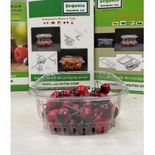 Bandeja de embalagem de kiwi com tomate plasticidade