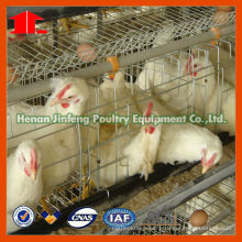 Jinfeng Chick Feeding Equipment