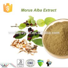 100% natural Balance blood sugar product 2% ~5% DNJ mulberry leaf extract