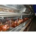 Птицы клетки специально разработаны для цыплят-бройлеров