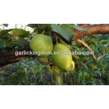 sell 2013 Early Su Pear