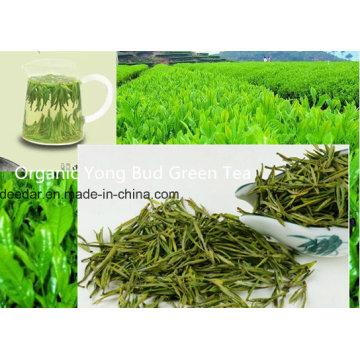 Chá verde fresco de Yong
