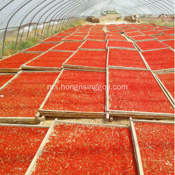 380 grains Sampel percuma Cina kering Goji berry