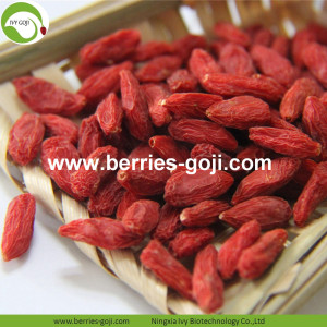Vente en gros sain rouge faible pesticides Goji baies