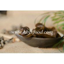 Vegetal seco da venda quente, fungo preto comestível