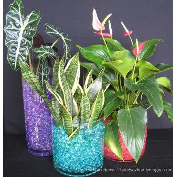 Sol de cristaux de gelée de fleurs de plantes colorées