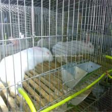 Gaiola dobrada galvanizada das aves domésticas / gado e gaiola