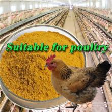 Meilleur prix Jaune Farine de gluten de maïs 60% Sachet de 50 KG Nourriture pour poulets
