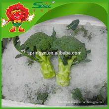 IQF nettoyant décoratif brocoli frais