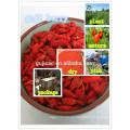 rojo Ningxia Goji Berry / Wolfberry Fruit / semillas de nísperos chinos rojo Ningxia Goji Berry / Wolfberry Fruit / semillas de chino Níspero