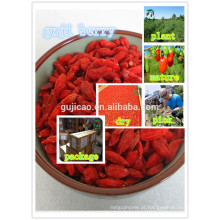 vermelho Ningxia Goji Berry / Wolfberry Fruit / sementes de nêspera chinesa vermelho Ningxia Goji Berry / fruto de Wolfberry / sementes de nêspera chinesas