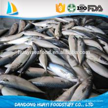 seafrozen whole round Pacific Mackerel (Scomber Japonicus) ,mackerel,Frozen Seafood