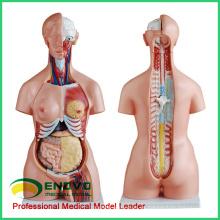 TORSO09 (12020) 85CM Tri-sexo 21 partes Torso modelos educativos anatómicos