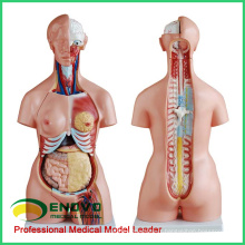 TORSO09 (12020) 85CM Tri-sexe 21 pièces torse Modèles anatomiques éducatifs