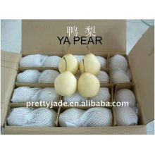 China wholesale fresh sweet and juicy Ya pear