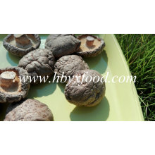 Classifique um cogumelo Shiitake liso vegetal seco natural