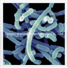 Lactobacillus Acidop...