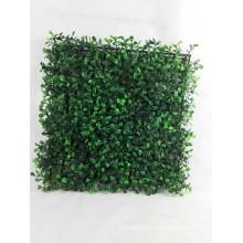 Tapis d'herbe de Buxus de qualité, herbe de Buxus, tapis de Buxus
