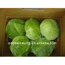 2012 fresh round cabbage with best price