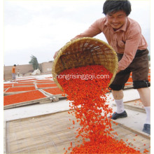 Rendah Sulfur Goji Berry Wolfberry Sweet Goji Berry