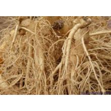 (GINSENG EXTRACT) Cosmetic Grade Ginseng Extract