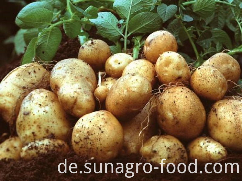 Organic Fresh Potatoes