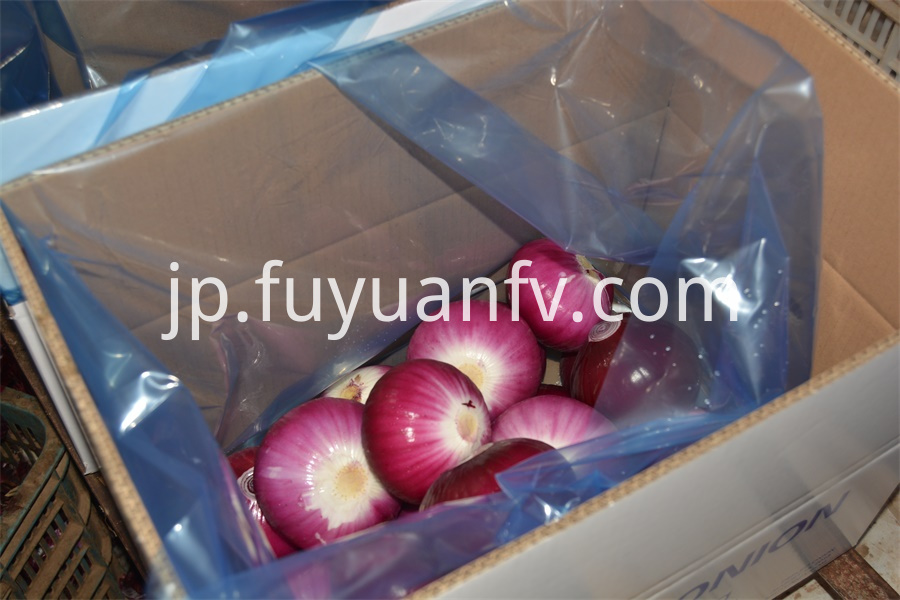 Onion From Shandong