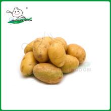potato/China potato/fresh potato