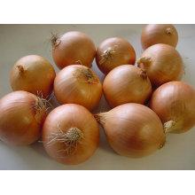 Exportar nueva cosecha fresca buena calidad cebolla amarilla