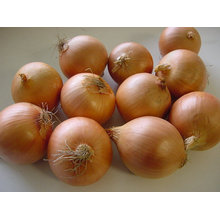 Export New Crop Fresh Good Quality Yellow Onion