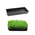 Hydroponics Seedling Germination Tray Without Holes