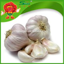 Fournisseur d'ail de qualité supérieure exportateur d'ail blanc frais en Chine