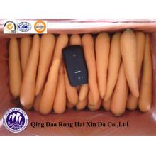 Chinesischer organischer Karotte Marktpreis Karotte 2014 neue Ernte frische Karotte