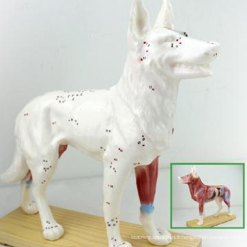 A05 (12005) Chien de vétérinaire en plastique Canine Anatomique Acupuncture Modèles 12005