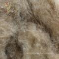 Cheaper Cashmere Origin from Cashmere in China