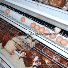 un tipo jaula de pollos de aves de corral para la capa de pollos de engorde