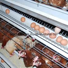 une cage de poulet de volaille de type pour la poule de poulailler de couche