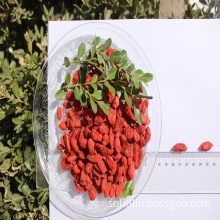 Natural Low Price Free Sample Organic Wolfberry