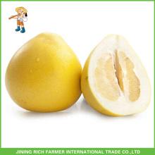 Frutas frescas Frutas chinesas Mel fresco Pomelo para vendas