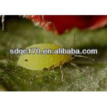 Vendre un insecticide à action rapide imidaclopride 97% TC 20% SL 70% WDG