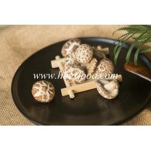Yongxing Alimentos Outono Planta Marcas Tea Flower Mushroom