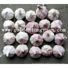 2016 New Crop Chinese Garlic