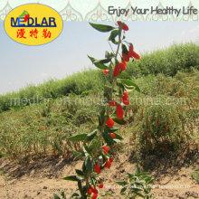 Medlar Lbp USDA Nof Organic Goji Berry