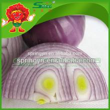 Cebola vermelha mais vendida cebola chinesa exportador