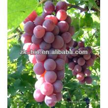 Natural 95% OPC Extracto de semilla de uva