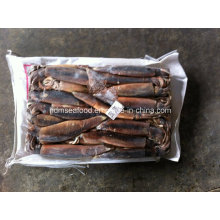 200-300g Top Quality Frozen Illex Squid