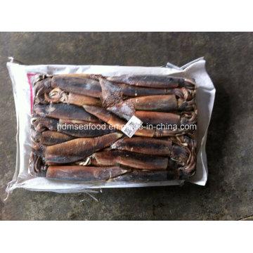200-300g Top Quality Frozen Illex Squid